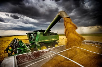 wheat harvest.jpg